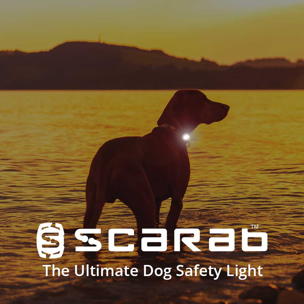 Scarab Beacon Ultimate Dog Safety Light