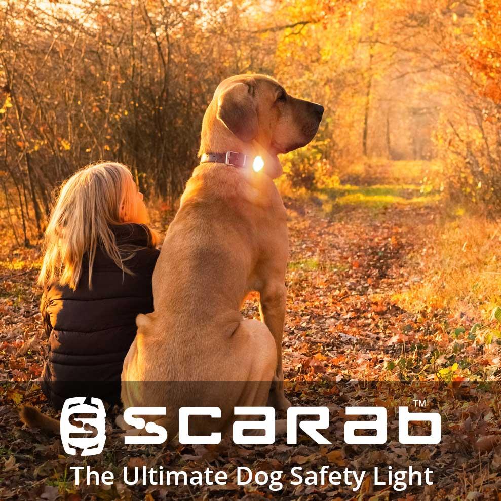 scarab beacon girl walking dog 1