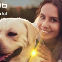 Dogs Help Improve your Metal Health - Walking with Yellow Scarab Dog Light