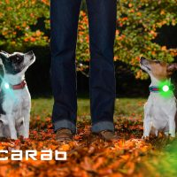 Scarab Dog Lights suitable for Small dogs with Collar Lock Kit